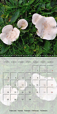 Rainforest Mushrooms (Wall Calendar 2019 300 × 300 mm Square) - Produktdetailbild 2
