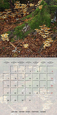 Rainforest Mushrooms (Wall Calendar 2019 300 × 300 mm Square) - Produktdetailbild 1