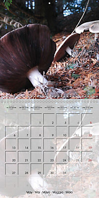 Rainforest Mushrooms (Wall Calendar 2019 300 × 300 mm Square) - Produktdetailbild 5