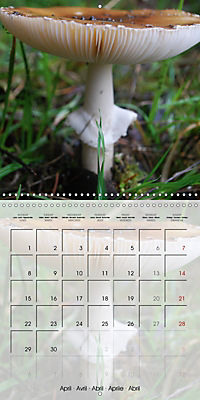 Rainforest Mushrooms (Wall Calendar 2019 300 × 300 mm Square) - Produktdetailbild 4