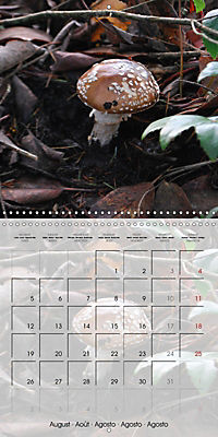 Rainforest Mushrooms (Wall Calendar 2019 300 × 300 mm Square) - Produktdetailbild 8