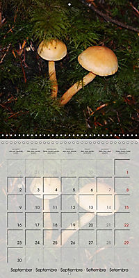 Rainforest Mushrooms (Wall Calendar 2019 300 × 300 mm Square) - Produktdetailbild 9