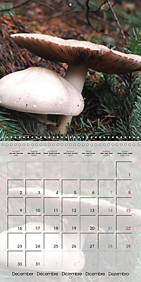 Rainforest Mushrooms (Wall Calendar 2019 300 × 300 mm Square) - Produktdetailbild 12