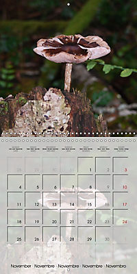 Rainforest Mushrooms (Wall Calendar 2019 300 × 300 mm Square) - Produktdetailbild 11