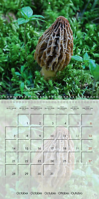 Rainforest Mushrooms (Wall Calendar 2019 300 × 300 mm Square) - Produktdetailbild 10