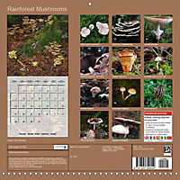 Rainforest Mushrooms (Wall Calendar 2019 300 × 300 mm Square) - Produktdetailbild 13