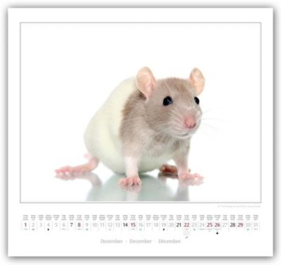 Ratten 2019 Kalender jetzt günstig bei Weltbild.ch bestellen