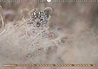 Raubkatzenkinder (Wandkalender 2019 DIN A3 quer) - Produktdetailbild 9