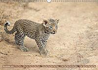 Raubkatzenkinder (Wandkalender 2019 DIN A3 quer) - Produktdetailbild 11