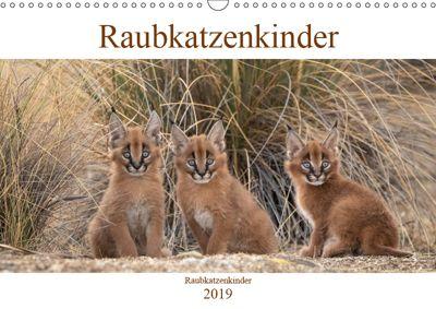 Raubkatzenkinder (Wandkalender 2019 DIN A3 quer), Marion Vollborn