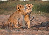 Raubkatzenkinder (Wandkalender 2019 DIN A3 quer) - Produktdetailbild 4