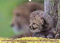 Raubkatzenkinder (Wandkalender 2019 DIN A3 quer) - Produktdetailbild 1
