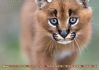 Raubkatzenkinder (Wandkalender 2019 DIN A3 quer) - Produktdetailbild 5