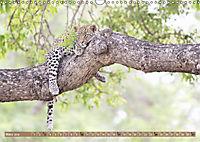 Raubkatzenkinder (Wandkalender 2019 DIN A3 quer) - Produktdetailbild 3