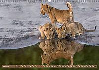 Raubkatzenkinder (Wandkalender 2019 DIN A3 quer) - Produktdetailbild 6