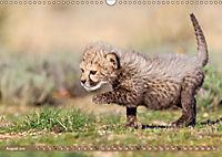 Raubkatzenkinder (Wandkalender 2019 DIN A3 quer) - Produktdetailbild 8