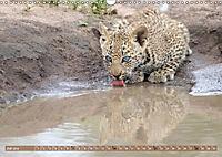 Raubkatzenkinder (Wandkalender 2019 DIN A3 quer) - Produktdetailbild 7