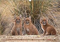 Raubkatzenkinder (Wandkalender 2019 DIN A3 quer) - Produktdetailbild 12