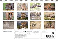 Raubkatzenkinder (Wandkalender 2019 DIN A3 quer) - Produktdetailbild 13