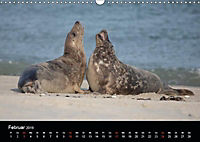 Raubtier der Nordsee - Kegelrobben vor Helgoland (Wandkalender 2019 DIN A3 quer) - Produktdetailbild 2