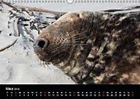 Raubtier der Nordsee - Kegelrobben vor Helgoland (Wandkalender 2019 DIN A3 quer) - Produktdetailbild 3