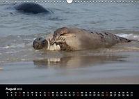 Raubtier der Nordsee - Kegelrobben vor Helgoland (Wandkalender 2019 DIN A3 quer) - Produktdetailbild 8