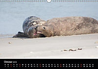 Raubtier der Nordsee - Kegelrobben vor Helgoland (Wandkalender 2019 DIN A3 quer) - Produktdetailbild 10