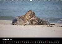 Raubtier der Nordsee - Kegelrobben vor Helgoland (Wandkalender 2019 DIN A3 quer) - Produktdetailbild 11