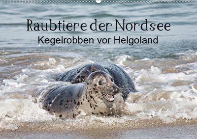 Raubtier der Nordsee - Kegelrobben vor Helgoland (Wandkalender 2019 DIN A2 quer), Udo Quentin
