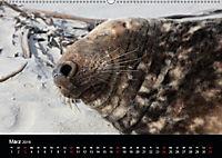 Raubtier der Nordsee - Kegelrobben vor Helgoland (Wandkalender 2019 DIN A2 quer) - Produktdetailbild 3