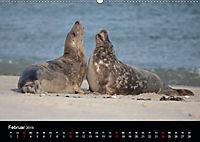 Raubtier der Nordsee - Kegelrobben vor Helgoland (Wandkalender 2019 DIN A2 quer) - Produktdetailbild 2