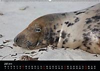 Raubtier der Nordsee - Kegelrobben vor Helgoland (Wandkalender 2019 DIN A2 quer) - Produktdetailbild 7