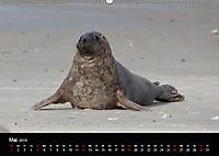 Raubtier der Nordsee - Kegelrobben vor Helgoland (Wandkalender 2019 DIN A2 quer) - Produktdetailbild 5