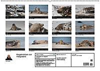 Raubtier der Nordsee - Kegelrobben vor Helgoland (Wandkalender 2019 DIN A2 quer) - Produktdetailbild 13