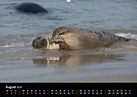 Raubtier der Nordsee - Kegelrobben vor Helgoland (Wandkalender 2019 DIN A2 quer) - Produktdetailbild 8