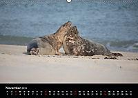 Raubtier der Nordsee - Kegelrobben vor Helgoland (Wandkalender 2019 DIN A2 quer) - Produktdetailbild 11