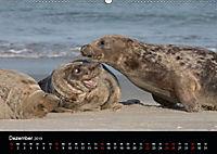 Raubtier der Nordsee - Kegelrobben vor Helgoland (Wandkalender 2019 DIN A2 quer) - Produktdetailbild 12