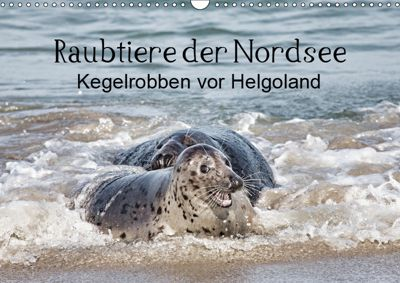 Raubtier der Nordsee - Kegelrobben vor Helgoland (Wandkalender 2019 DIN A3 quer), Udo Quentin