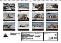 Raubtier der Nordsee - Kegelrobben vor Helgoland (Wandkalender 2019 DIN A3 quer) - Produktdetailbild 13