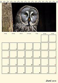 Raubvögel (Tischkalender 2019 DIN A5 hoch) - Produktdetailbild 6
