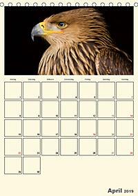 Raubvögel (Tischkalender 2019 DIN A5 hoch) - Produktdetailbild 4