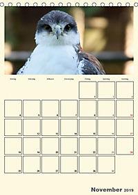 Raubvögel (Tischkalender 2019 DIN A5 hoch) - Produktdetailbild 11