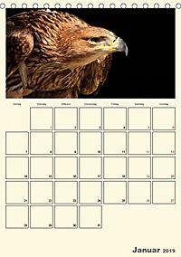 Raubvögel (Tischkalender 2019 DIN A5 hoch) - Produktdetailbild 1