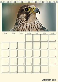 Raubvögel (Tischkalender 2019 DIN A5 hoch) - Produktdetailbild 8