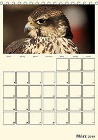 Raubvögel (Tischkalender 2019 DIN A5 hoch) - Produktdetailbild 3