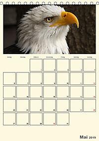 Raubvögel (Tischkalender 2019 DIN A5 hoch) - Produktdetailbild 5