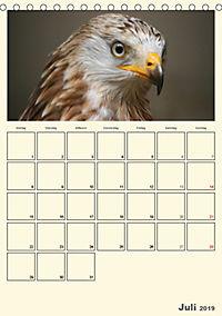 Raubvögel (Tischkalender 2019 DIN A5 hoch) - Produktdetailbild 7