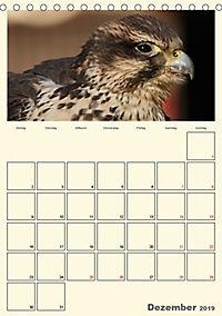 Raubvögel (Tischkalender 2019 DIN A5 hoch) - Produktdetailbild 12