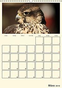 Raubvögel (Wandkalender 2019 DIN A3 hoch) - Produktdetailbild 3
