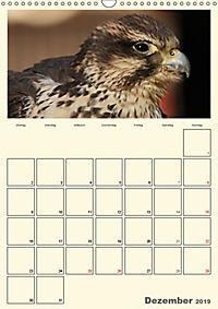 Raubvögel (Wandkalender 2019 DIN A3 hoch) - Produktdetailbild 12